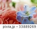 バラ 花 クローズアップの写真 33889269