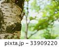 森の命 33909220