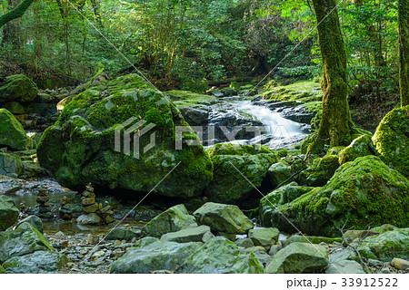 夏の渓流(福岡県北九州市紫川源流) 33912522