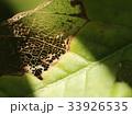 木の葉 葉 草の葉の写真 33926535