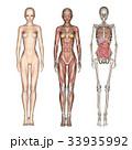 筋肉 骨格 解剖のイラスト 33935992