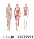 筋肉 骨格 解剖のイラスト 33935994