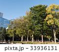 札幌市大通公園 33936131