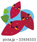 さつまいも 薩摩芋 野菜のイラスト 33936333