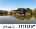 平安神宮の枝垂れ桜 33938397