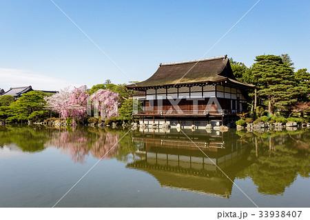 平安神宮の枝垂れ桜 33938407