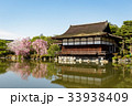 平安神宮の枝垂れ桜 33938409
