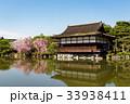 平安神宮 桜 枝垂れ桜の写真 33938411