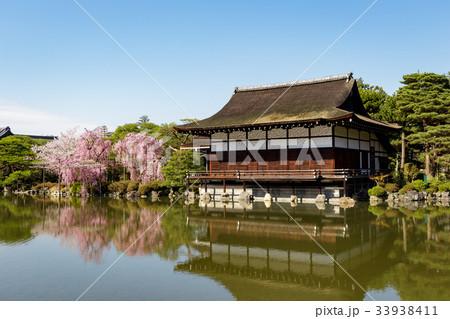 平安神宮の枝垂れ桜 33938411