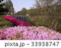 ソウル オリンピック公園 ツツジの写真 33938747