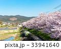 賀茂川の春 33941640