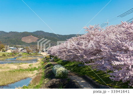 賀茂川の春 33941641