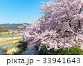 賀茂川の春 33941643
