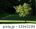 植物 樹木 木の写真 33943289