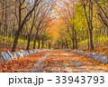 秋 背景 きれいの写真 33943793