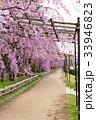 半木の道 - 枝垂れ桜 33946823