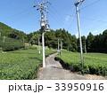 茶畑の道 33950916