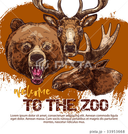 Zoo animal banner with sketched bear, dear and elk 33953668