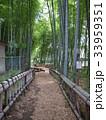 竹林公園 33959351