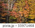 鏡池 戸隠高原 秋の写真 33971468