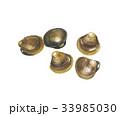 蜆 貝 貝類のイラスト 33985030