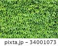 ツタ(蔦) 34001073