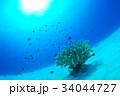 サンゴと小魚 34044727