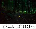 蛍 ヒメボタル 発光の写真 34152344
