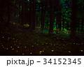 蛍 ヒメボタル 発光の写真 34152345