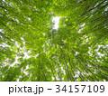 ケヤキ林 34157109