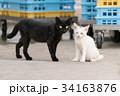 黒猫とオッドアイの白猫の子猫 34163876