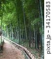竹林公園 34170583