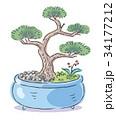 盆栽 園芸 松のイラスト 34177212