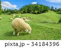 六甲山牧場 羊 青空 34184396