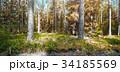 森林 林 森の写真 34185569