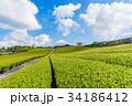【静岡県】富士山と茶畑 34186412