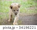 動物 34196221