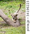 動物 34196223