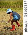 稲刈り 収穫 田んぼの写真 34199387