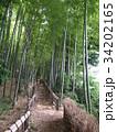 竹林公園 34202165