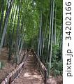 竹林公園 34202166