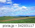 広大な麦畑05 34203117