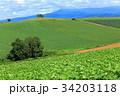 緑の丘021 34203118