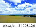 広大な麦畑06 34203120