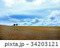 広大な麦畑07 34203121