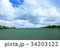 玉ねぎ畑 34203122