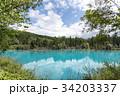 北海道 美瑛の青い池 34203337