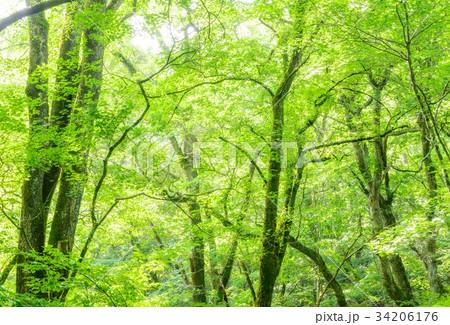 深い森の中 34206176