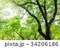 樹木 森林 森林公園の写真 34206186