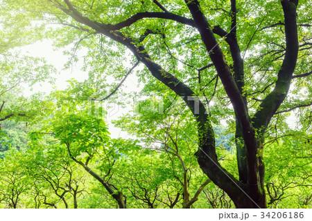 森林公園の樹木 34206186